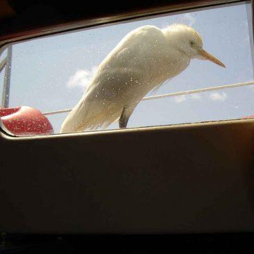 L'Egret