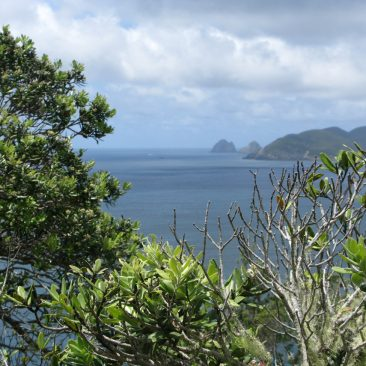 View of Cape Brett from ashore on the Rawhiti Peninsula above Oke Bay