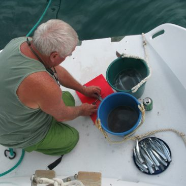 """Joe cleaning a bucket of pipers on the """"back forty"""" scoop"""